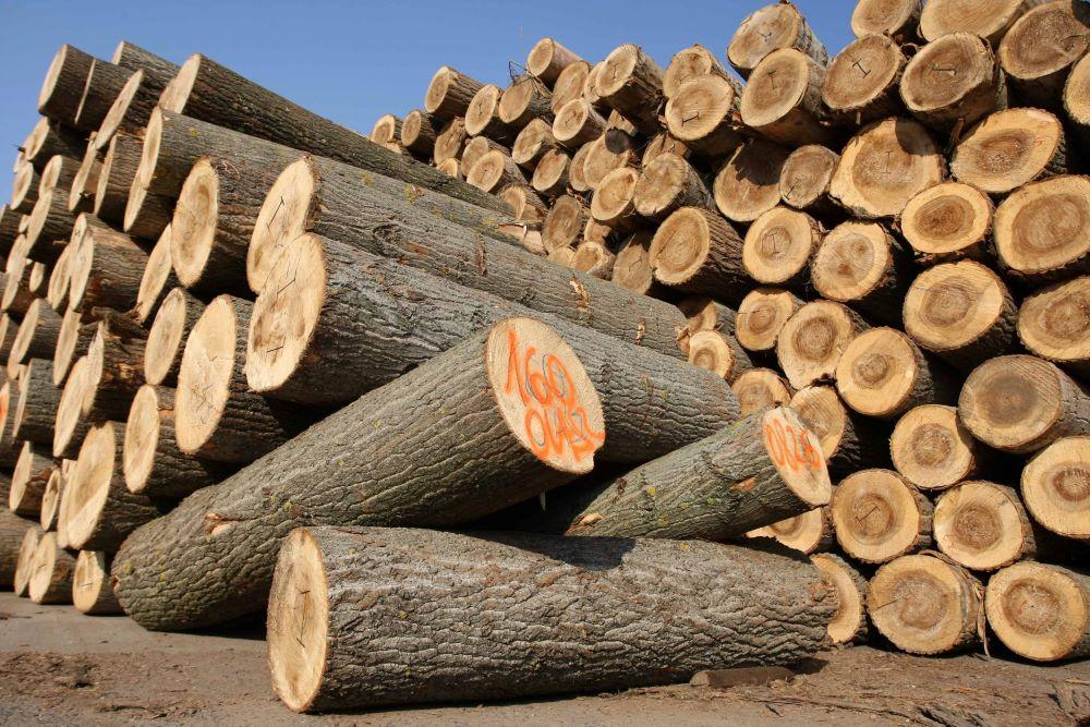 faanyag drágulás, fa hiány