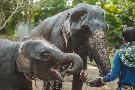 Thaiföld elefánt