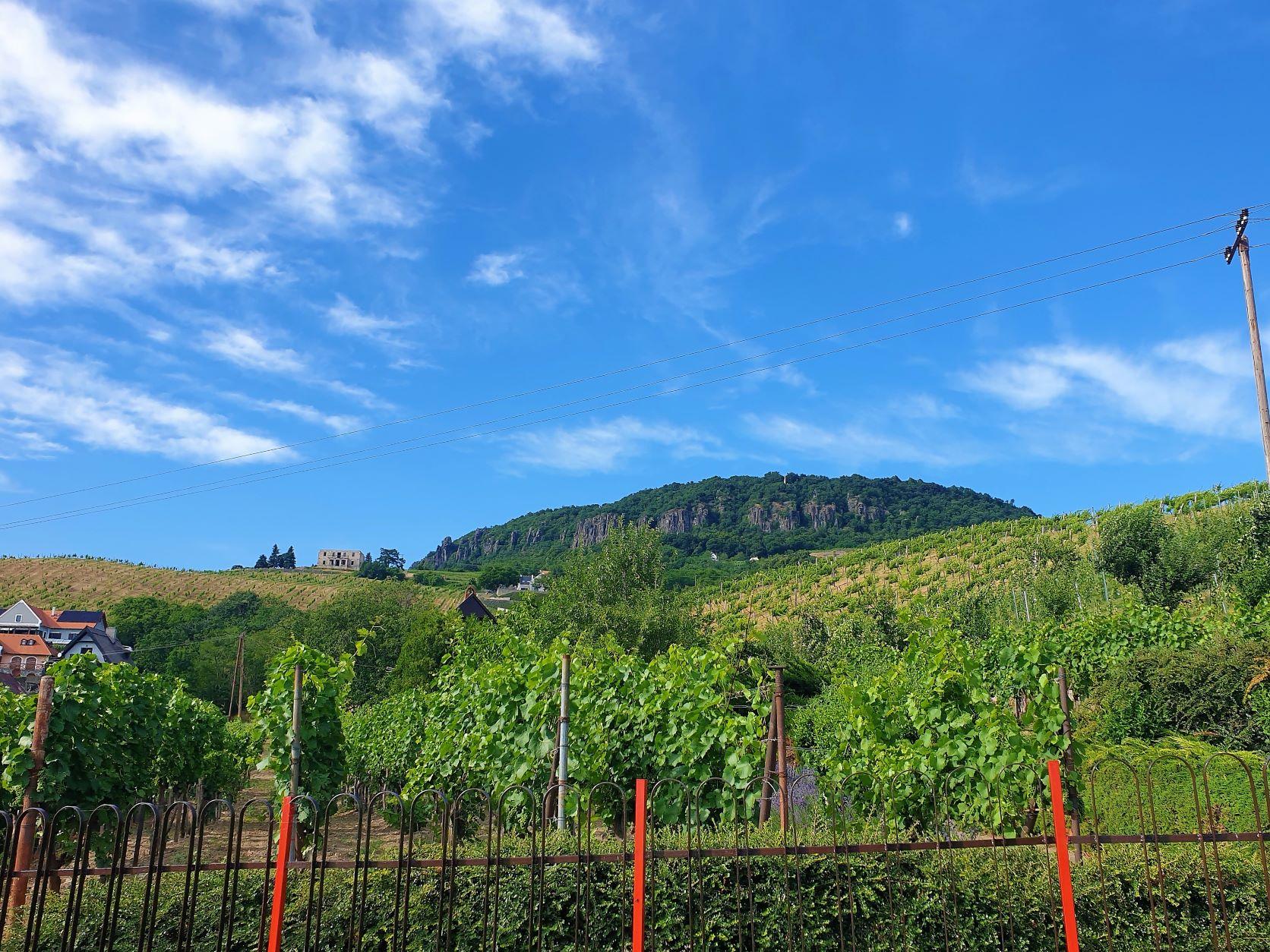 A Római úton sétálva szőlő ültetvények és borászatok jönnek szembe