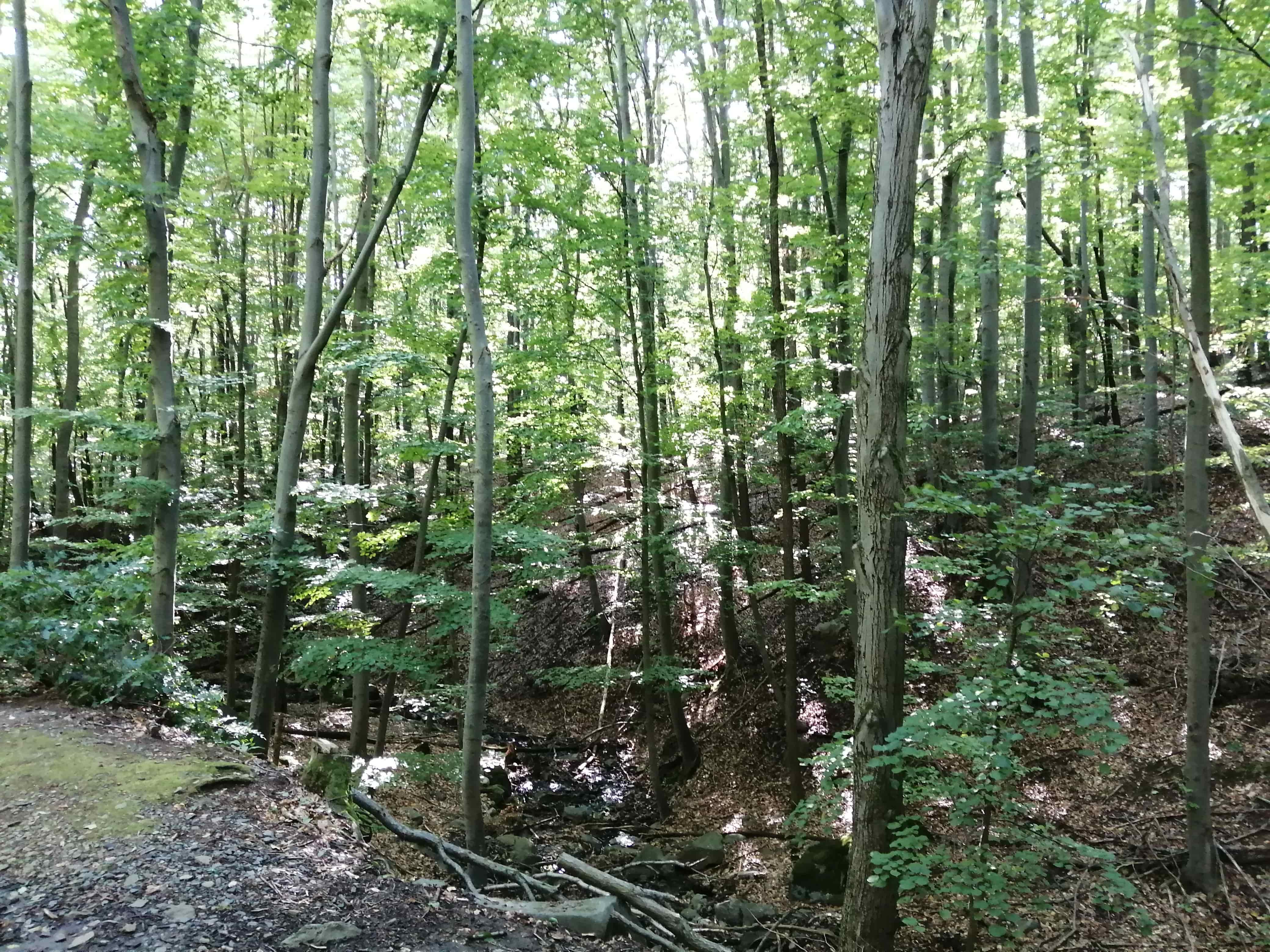 Erdő, Mátra, kidőlt fa