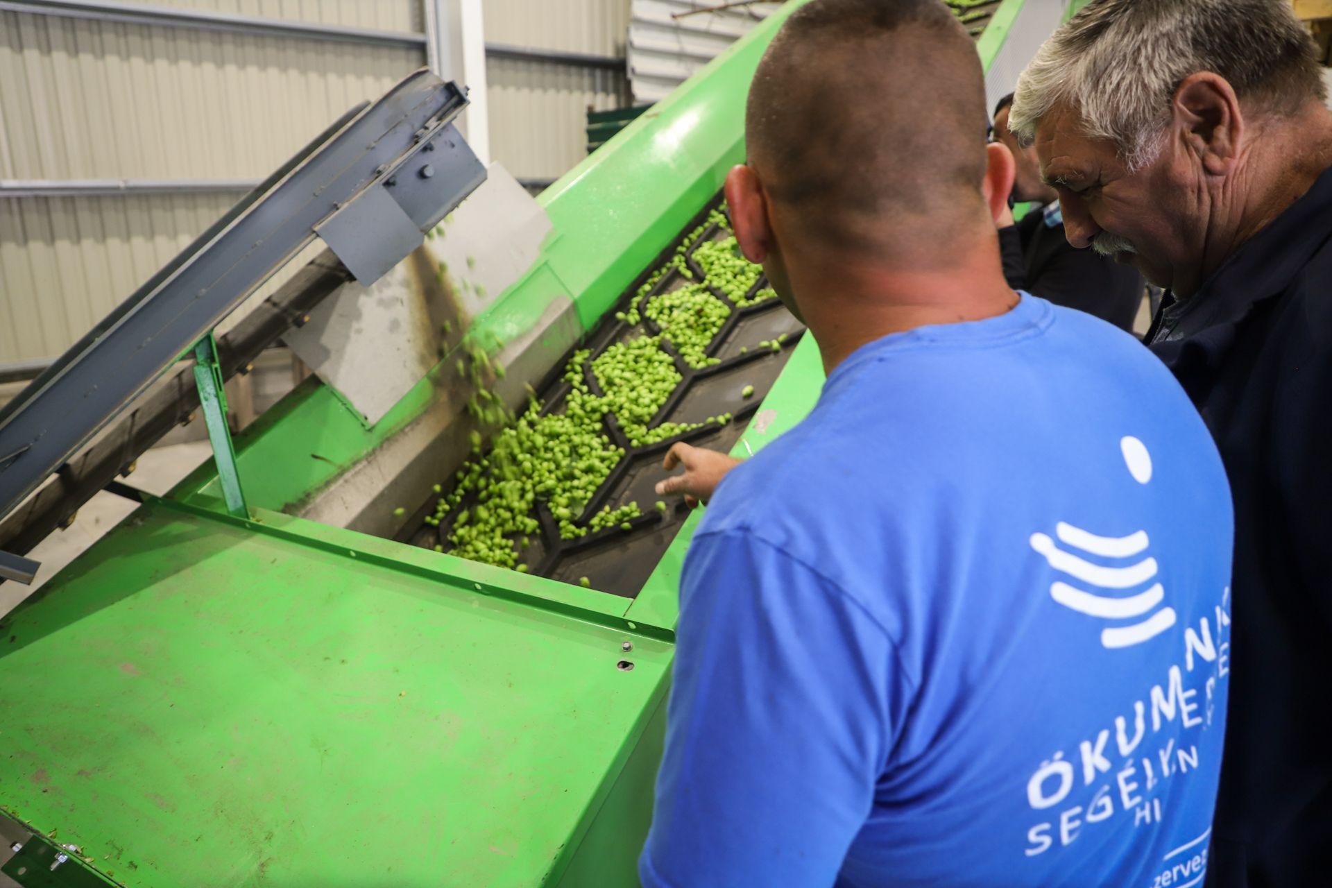 Az Ökumenikus Segélyszervezet ültetvényein szüretelőgéppel kezdték meg a munkálatokat